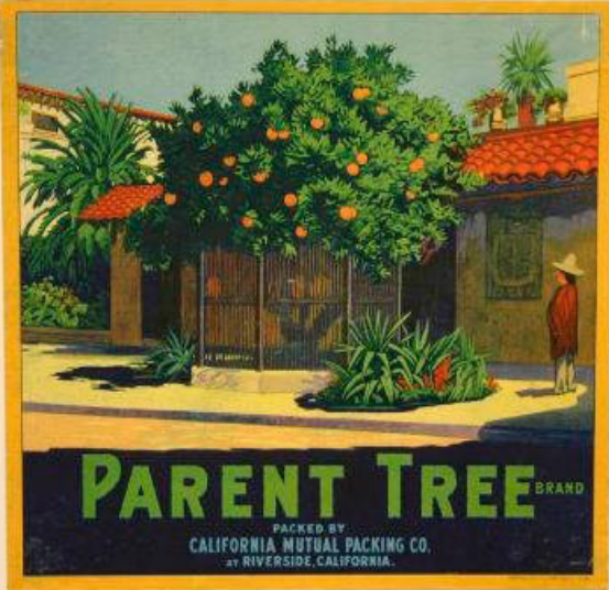 parent_tree2