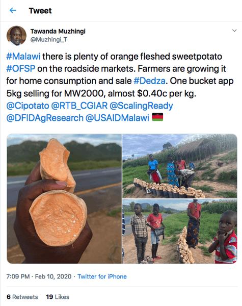 Tweet about orange-fleshed sweetpotato with images