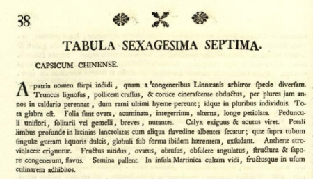Original description of Capsicum chinense